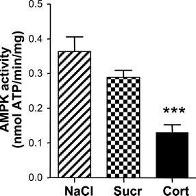 Effects of glucocorticoid treatment on hypothalamus: A