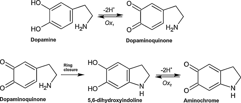 Scheme 1. Steps of electrochemical oxidation of dopamine