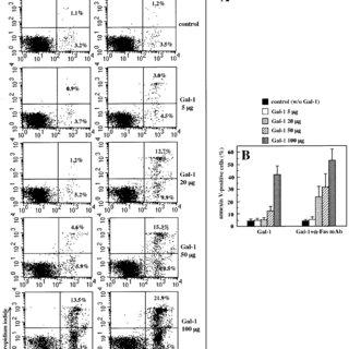 (PDF) Galectin-1 Sensitizes Resting Human T Lymphocytes to