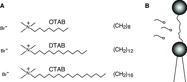 (A) The chemical structure of the surfactants studied in