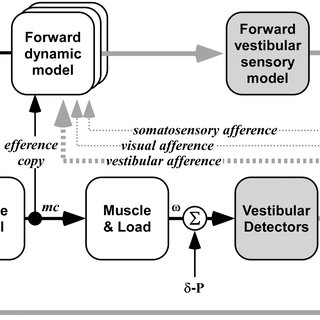 Model of vestibular sensory control for balance. Motion