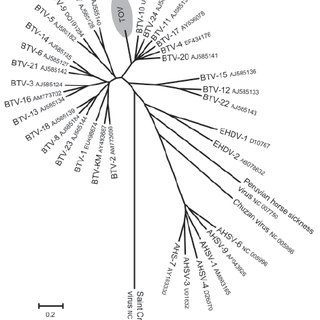 Phylogenetic analysis of Toggenburg orbivirus (TOV