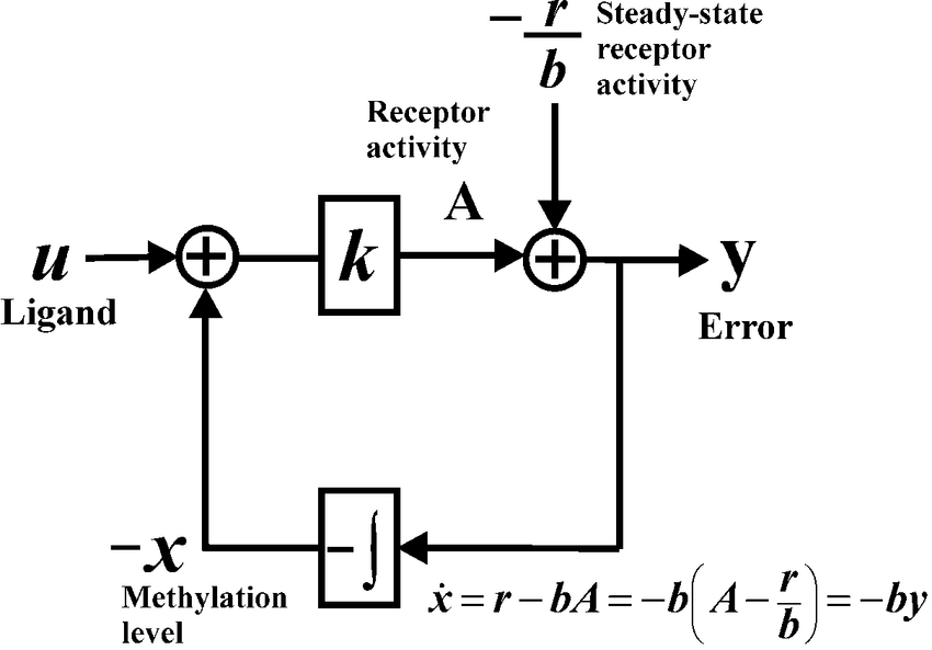 2 Block diagram of integral feedback control and bacterial