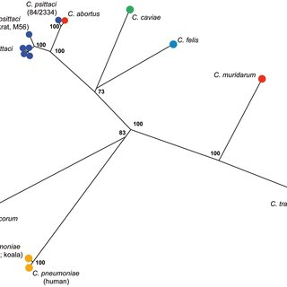 Phylogenetic analyses of concatenated sequences of 7