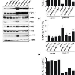 (PDF) Abrogation of BRAFV600E-induced senescence by PI3K
