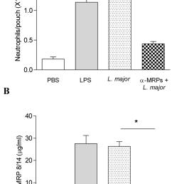 leishmania induces leukocytes recruitment and mrp secretion in the download scientific diagram [ 850 x 1324 Pixel ]