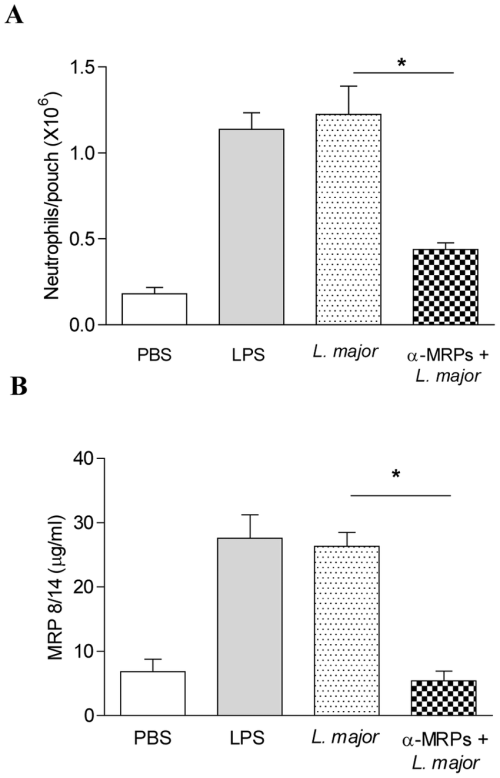 small resolution of leishmania induces leukocytes recruitment and mrp secretion in the download scientific diagram