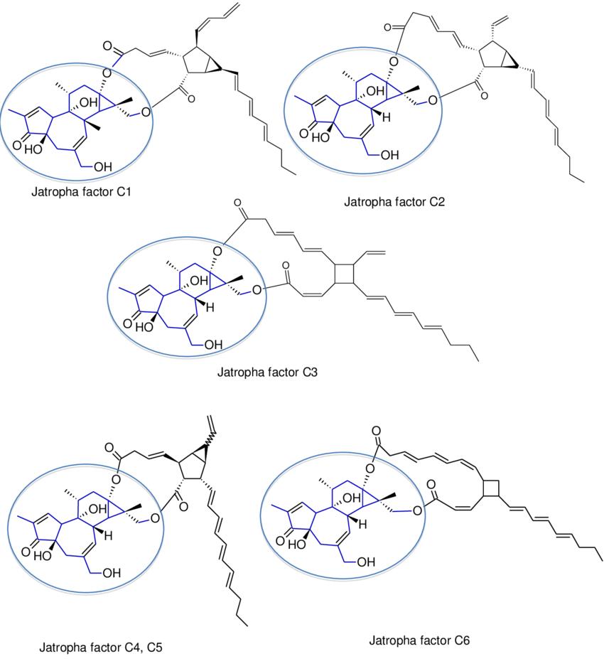 hight resolution of structures of the ester groups of jatropha factors c1 c6