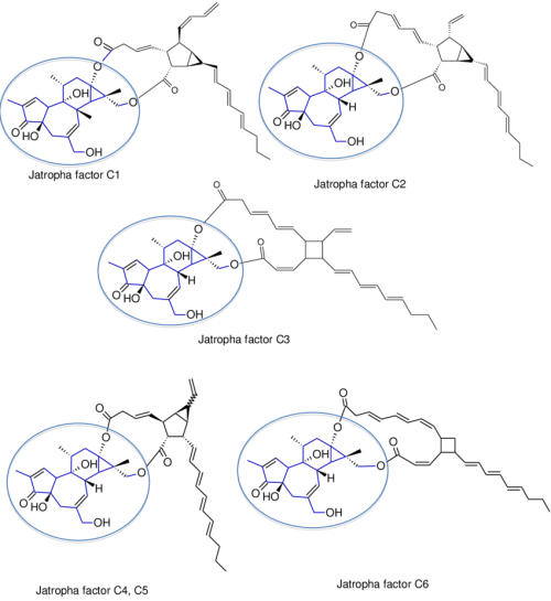 small resolution of structures of the ester groups of jatropha factors c1 c6