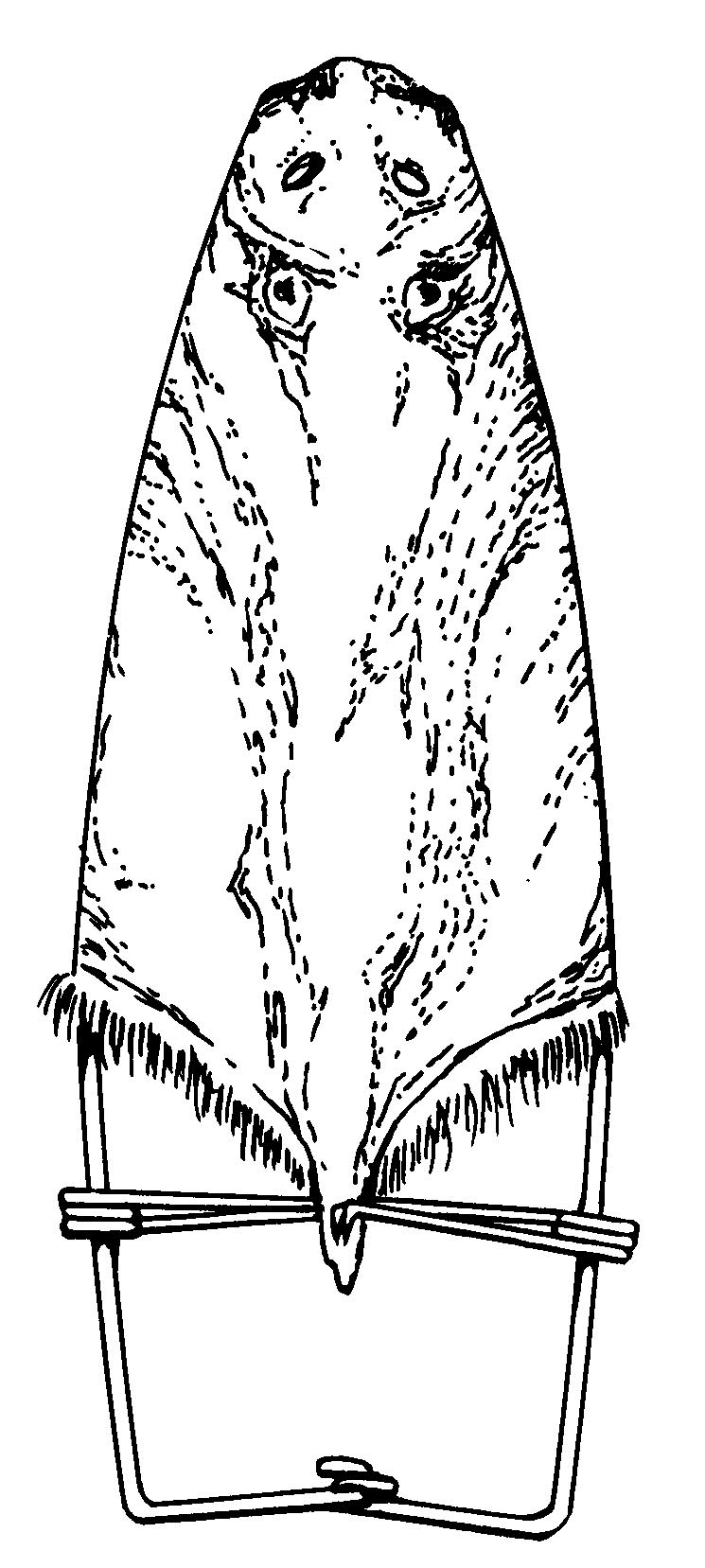 A muskrat pelt on a galvanized wire frame, showing the
