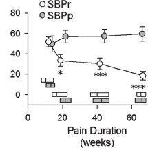 Hippocampal-cortical connectivity differences between pain