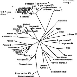 (PDF) Molecular evolution of the chalcone synthase