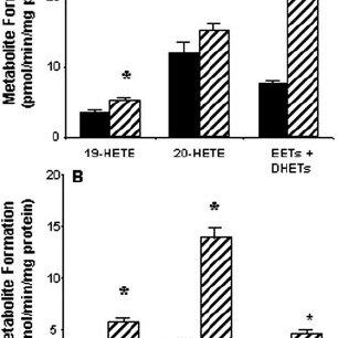 (PDF) Induction of Renal Cytochrome P450 Arachidonic Acid
