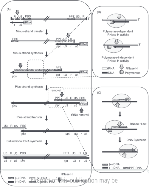 small resolution of schematic representation of hiv 1 reverse transcription a a stepwise process including