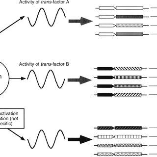 Rhythms in LL of mRNA abundance of a class 1 gene (psbAI