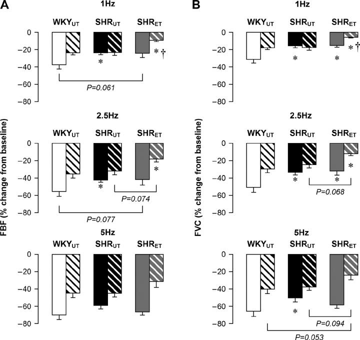 FBF ( A ) and FVC ( B ) responses to lumbar sympathetic