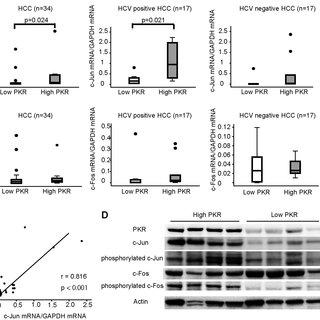(PDF) Protein Kinase R Modulates c-Fos and c-Jun Signaling