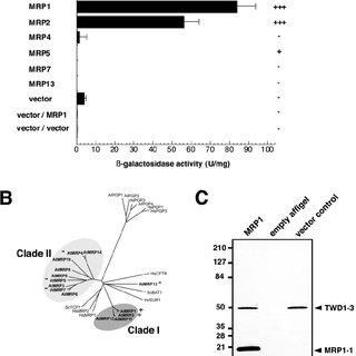 (PDF) Arabidopsis Immunophilin-like TWD1 Functionally