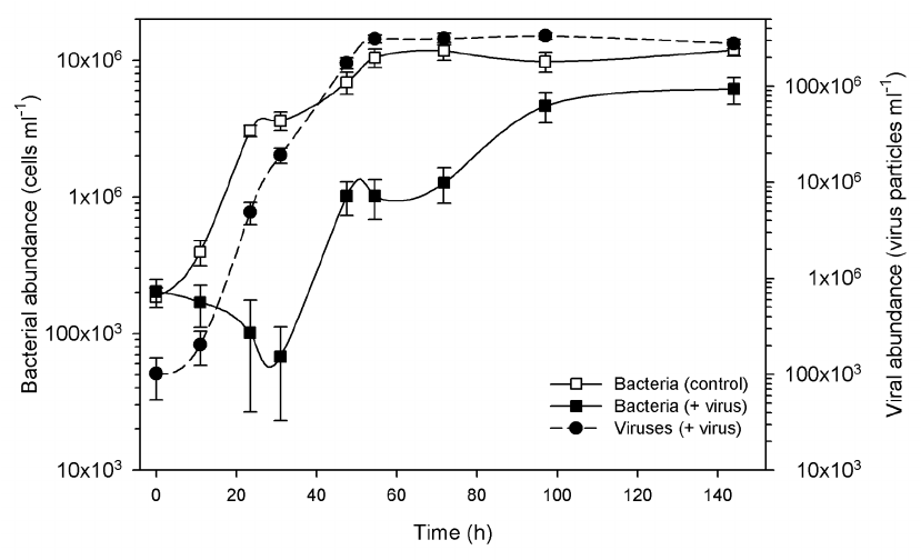 Virus Vs Bacteria Venn Diagram Worksheet
