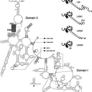 Comparison of telithromycin-binding modes in D50S (binding