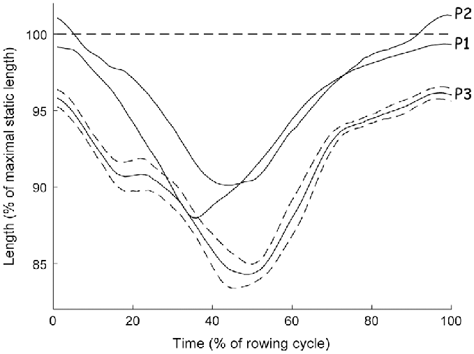 static stretching tests used to extract the maximum