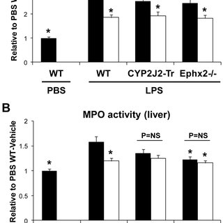 EETs protect LLC-PK1 cells from cisplatin-induced