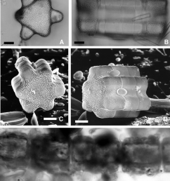 a light micrscope valve view of acid cleaned download scientific diagram [ 850 x 1015 Pixel ]