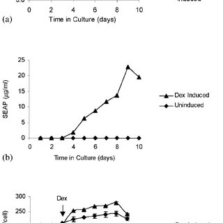 Secreted alkaline phosphatase production by MMapG-6 cells