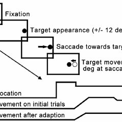 Schematic representations of the saccade adaptation test
