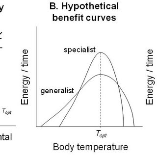 (PDF) The evolution of thermal physiology in endotherms