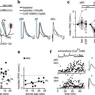 (PDF) Adult Neurogenesis Produces Neurons with Unique