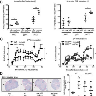 MK2-deficient DCs mediate Th1 differentiation. ( A ) Th1