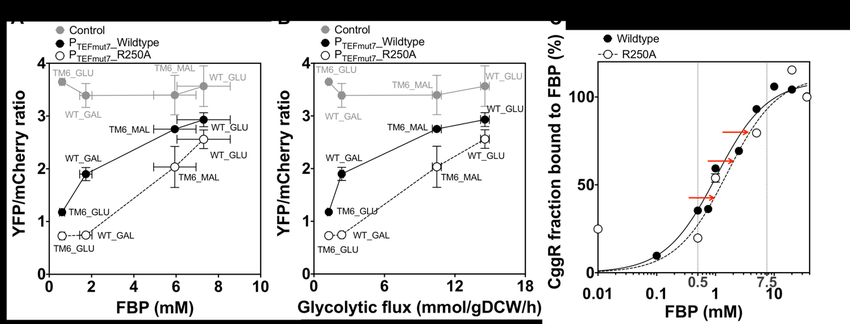 The engineered flux-sensor accurately reports glycolytic