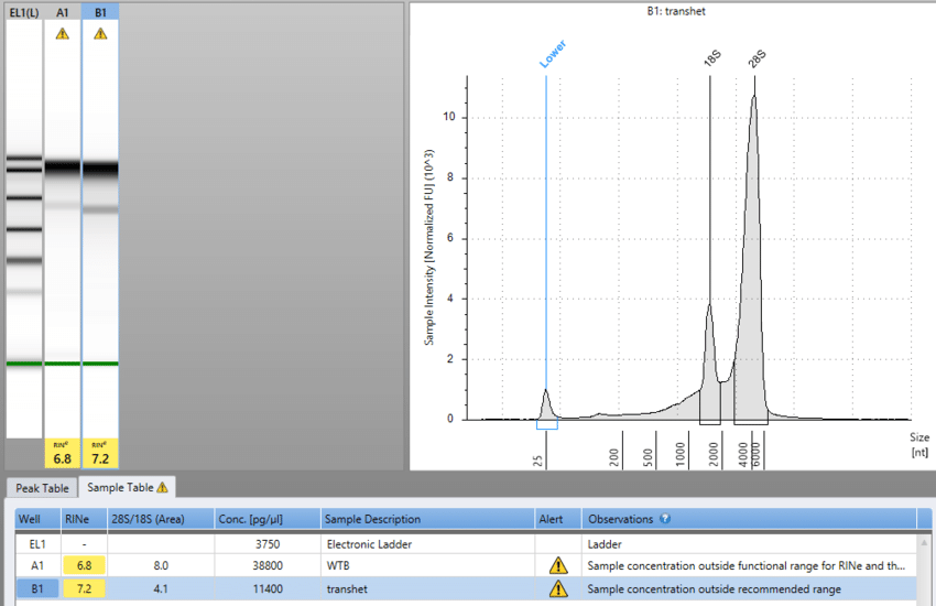 RNA degradation after treatment with TURBO DNA-free™ Kit?