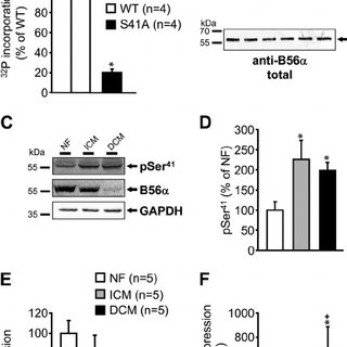 (PDF) Protein Phosphatase 2A Is Regulated by Protein