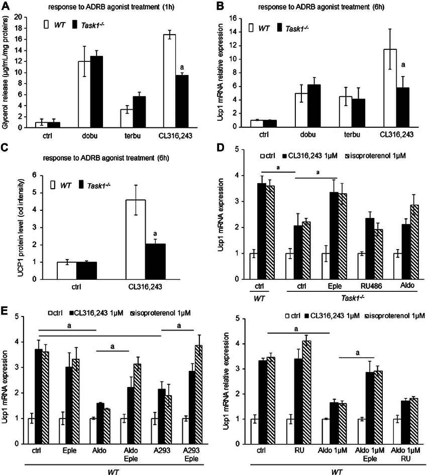TASK1 de fi ciency affects the ADRB3 and MR pathways in
