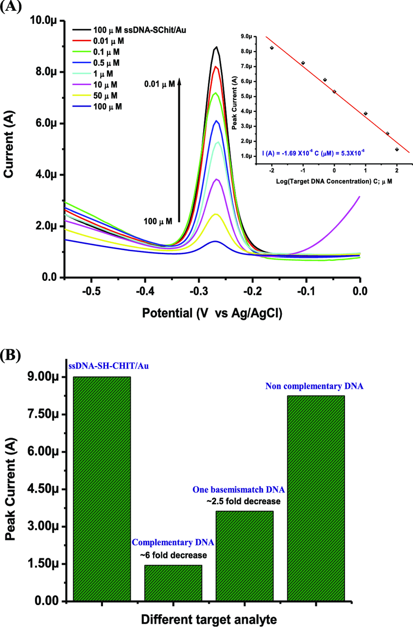 hight resolution of a dpv response of ssdna sh chit au bioelectrode after hybridization with complementary