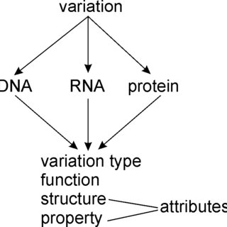 General structure of VariO. The ontology is designed for