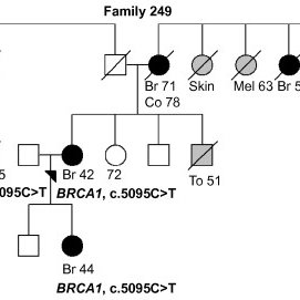 Family 262 pedigree. Family pedigree of the index