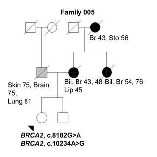 Family 249 pedigree. Family pedigree of the index