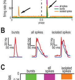 t type calcium channels promote coding of opposite movement directions by bursts and isolated spikes [ 850 x 1453 Pixel ]