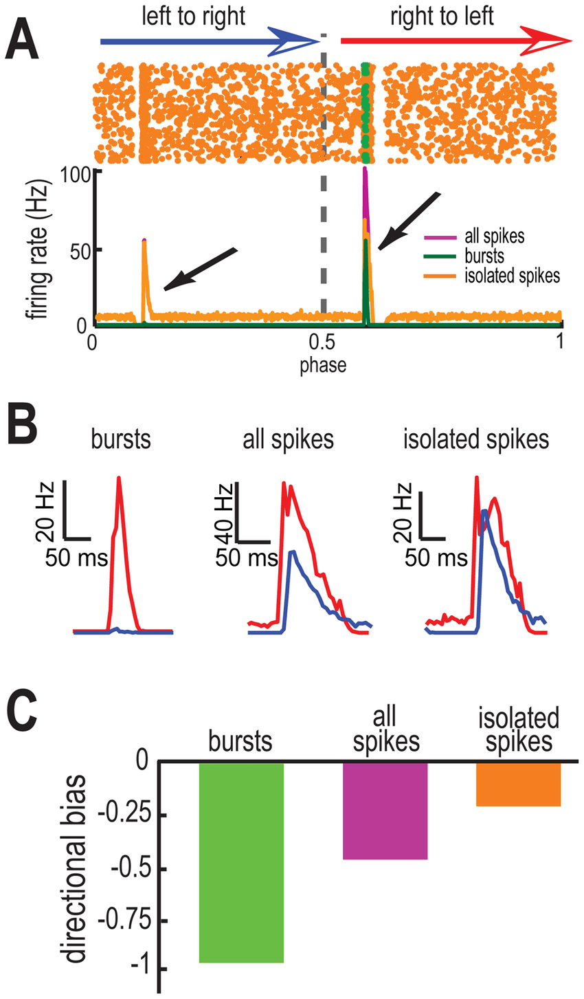 hight resolution of t type calcium channels promote coding of opposite movement directions by bursts and isolated spikes