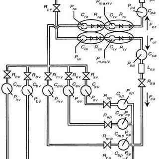 Block diagram of the integrated gas exchange model