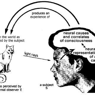 (PDF) How experienced phenomena relate to things