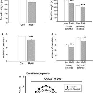 Immunocytochemical examination of DCX immunoreactivity in