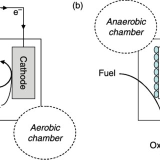 Lab-scale batch-type double-chambered microbial fuel cell