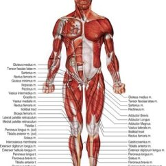 Medial Lower Leg Muscles Diagram Automotive Electrical Wiring Diagrams Symbols Skeletal Structure Of Right Foot 26 A Lateral View And B Human Body Extremity Anterior 27
