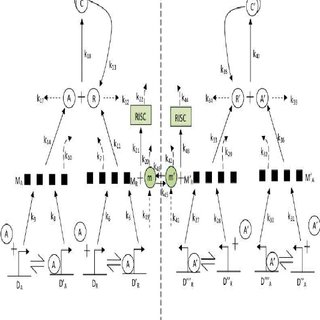 (PDF) Stochastic synchronization of genetic oscillators