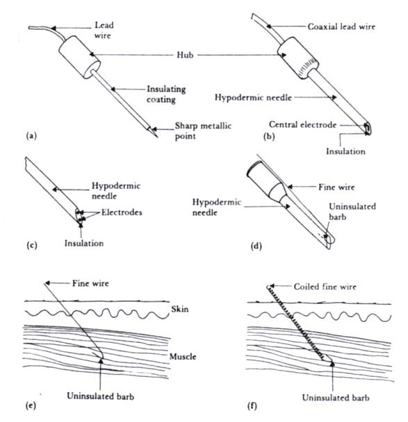 Needle and wire electrodes for percutaneous measurement of