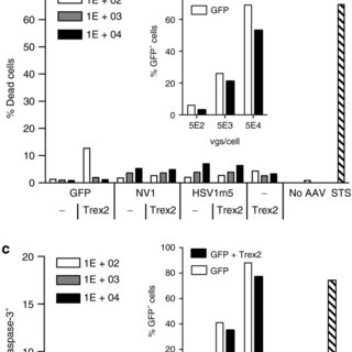Lack of homing endonuclease (HE)-induced toxicity. (a